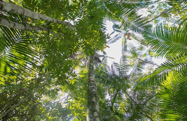 Desmatamento-por-que-a-Floresta-Amazonica-em-pe-vale-mais